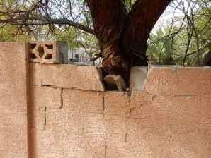 Perimeter walls and vegetation are also part of your inspection. It's not a requirement in the Nevada Standards of practice but at House to Home Inspection we exceed the Standards. The wall and tree removal in this case may be the burden of the Seller.